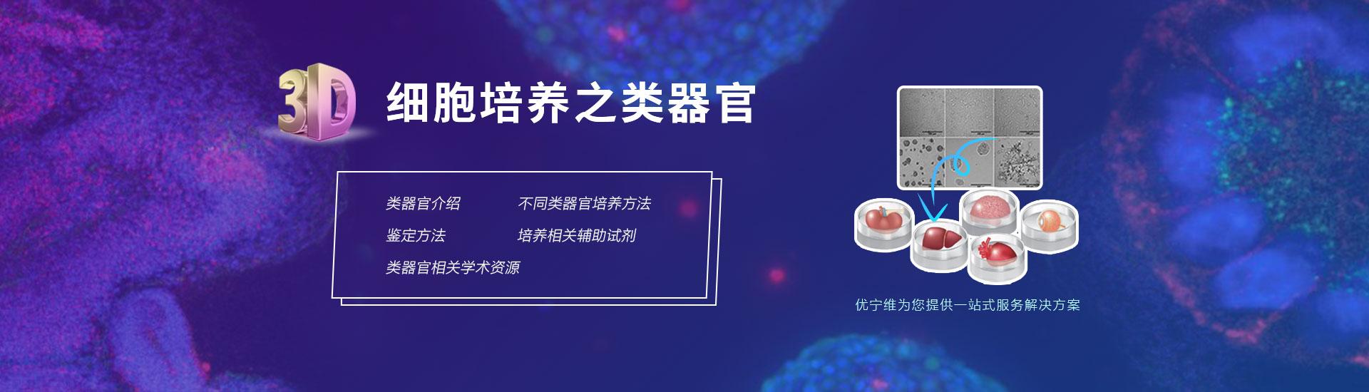 3D细胞培养之类器官
